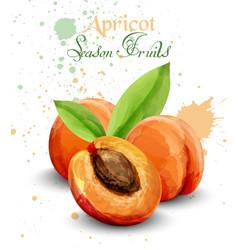 Apricot watercolor delicious fruit vector