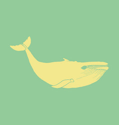 Hand drawn of humpback whale sketch detailed vector