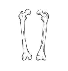 Hand drawn realistic human bones vector