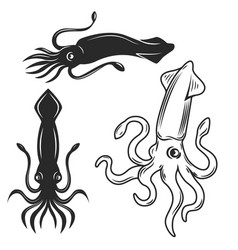 set of the squid isolated on white background vector image
