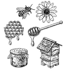 ink hand drawn sketch style honey set vector image