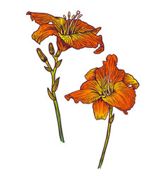 floral hand drawn with lily vector image