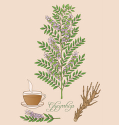 Glycyrrhiza plant vector