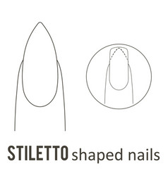 Nail shape stiletto vector