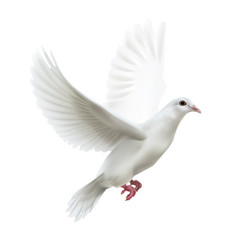 White flying dove vector