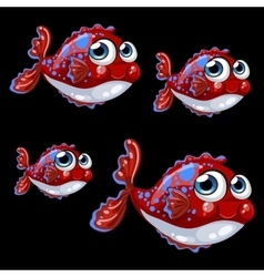 Sweetheart spotted shy fish on a black background vector image