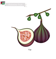 Fresh figs a famous fruit in pakistan vector