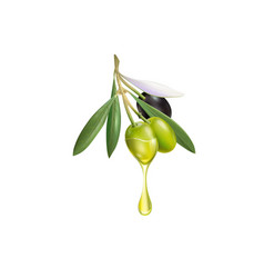 realistic olive branch 3d for vector image