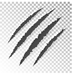 Scratch claws of animal vector