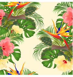 seamless texture tropical flowers hibiscus vector image