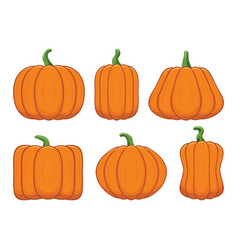 set ripe orange pumpkins vector image