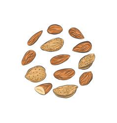 Almond nuts sketch vector