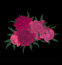 beautiful bouquet pink peonies with green vector image