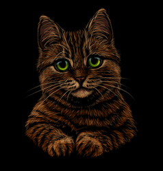 cat realistic colorful hand-drawn portrait vector image