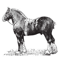 Draft horse vintage vector