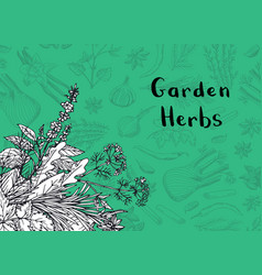 hand drawn herbs and spices background vector image