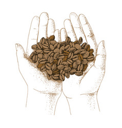 hands holding coffee beans vector image