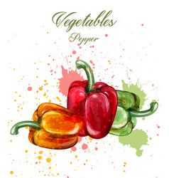 peppers watercolor juicy colorful vector image