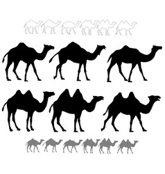 Set of black silhouettes camels vector