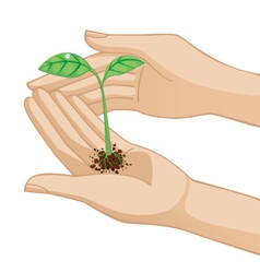 hand holding plant vector image vector image