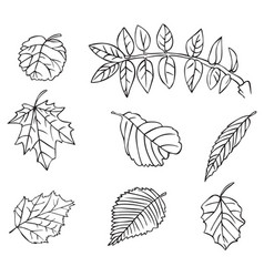 tree leaves drawing vector image