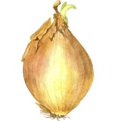 yellow onion bulb vector image