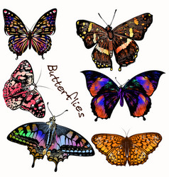 collection realistic colorful butterflies vector image