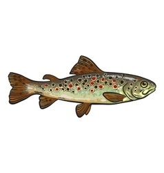 Hand drawn rainbow trout sketch style vector