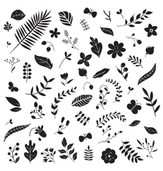 Botanical elements set vector image vector image