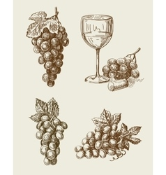 grape doodle vector image vector image