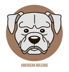portrait of american bulldog vector image