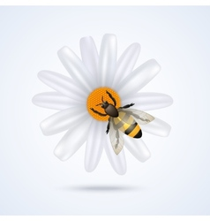 Bee with flower vector