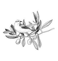 Hand drawn yellow wagtail sitting on olive vector
