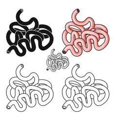 Human small intestine icon in cartoon style vector