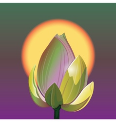 Lotus and sunrise vector image
