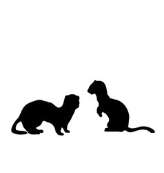 Silhouette two weasels and a ferret an animal vector