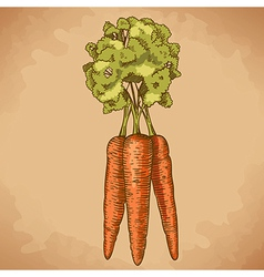 engraving carrot retro vector image
