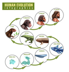 Human evolution infographics vector