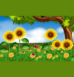 Sunflowers and ladybugs in garden vector