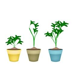 Three Ornamental Plants in Ceramic Flower Pots vector