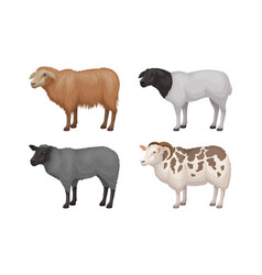 Farm cattle with hornes and wooly coat set vector