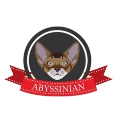 Flat icon pedigreed cat abyssinian vector