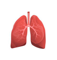 Human lungs realistic medicine flat vector