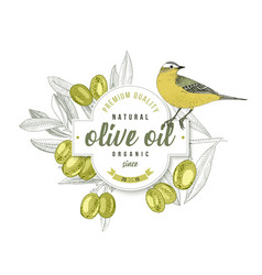 olive oil label design with yellow wagtail over vector image