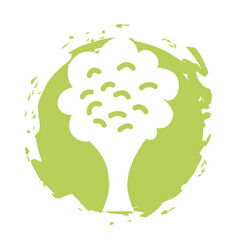 Broccoli fresh vegetable isolated icon vector