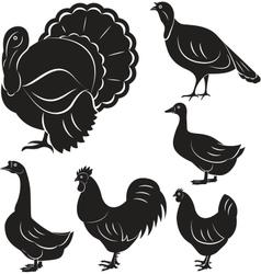 Farm birds vector