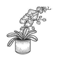 Orchid flower sketch vector