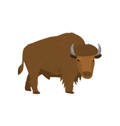 big brown american bison standing at white vector image