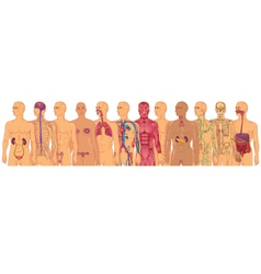 Body systems vector image