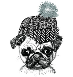 Cartoon fashionable funny pug in stylish hat vector
